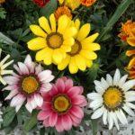 Vivir como las flores